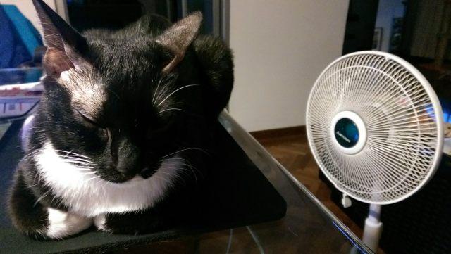 Wilma's fan